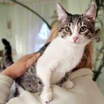 Котенок Том Сойер игривый и весёлый мальчик в дар, в Москве