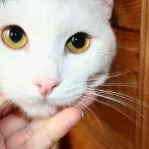 Андрей - спокойный белоснежный котик ищет дом, в Москве