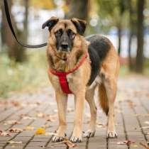Молодая, очень добрая и воспитанная собачка Тэрри, в Москве