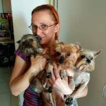 Стрижка собак и кошек с выездом в любой район г. Сочи, в Сочи