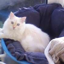 Ищу дом котику, в Симферополе