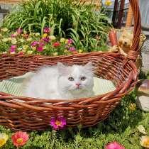 Котик от питомника, в г.Алматы