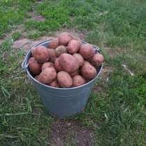 Доставка картофеля до дома, в Прокопьевске