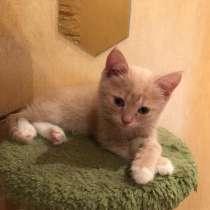 Классный Рыжий позитивный котенок в добрые руки, в Москве