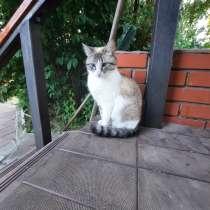 Пропала кормящая кошка Ксюша.1,5 г, в Чехове