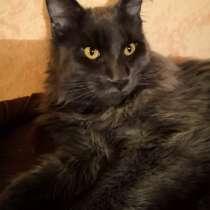 Мейн кун кот 6 мес, в Электростале