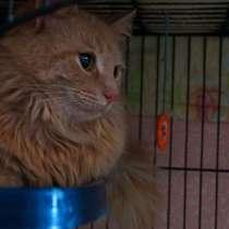 Ласковый кот Лео в добрые руки, в Москве