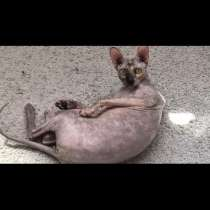 В Алтане (возле изумрудного города, кул гали) пропала кошка, в Казани