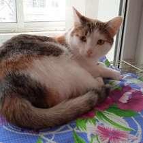 Стерилизованной кошке Асеньке ищем дом, в Кургане
