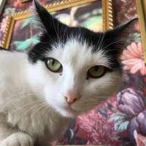 Кошка в добрые руки, в Челябинске