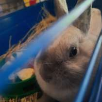 Отдам в дар декоративного кролика, в Елеце