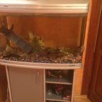 Продаю аквариум, в Саранске