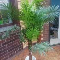 Искусственная пальма, в Бронницах