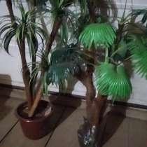 Искусственные пальмы, в Можге
