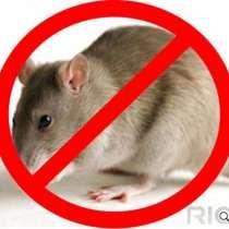 Мыши крысы уничтожить грызуны - Томск, в Томске
