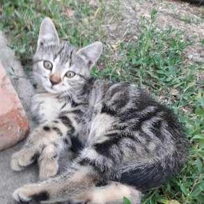 Котята разного окраса в добрые руки, в Армавире