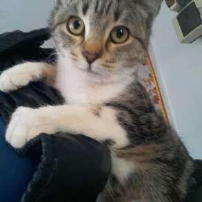 Котенок - девочка в белых носочках в добрые руки, в Армавире