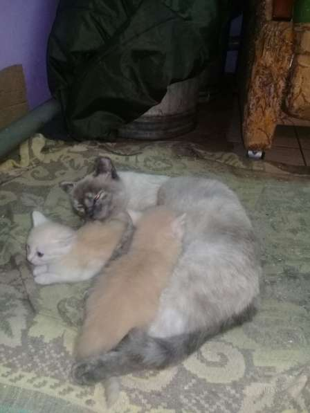 Котята в Кемерове фото 3