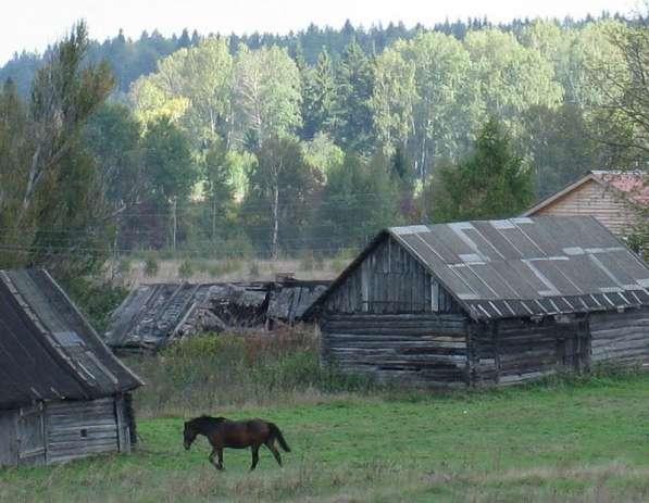 Помощник по хозяйству на лошадиную ферму(г. Шелково)