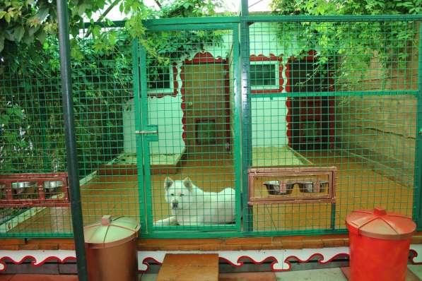 Передержка-домашний отель для собак