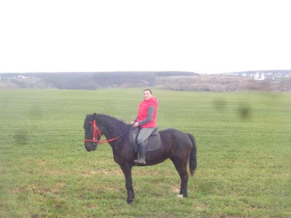 Прогулки на лошадях в Воронеже фото 3