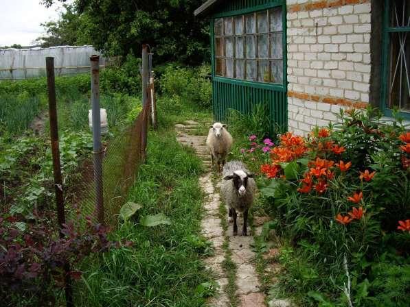Дом с большим участком и лугом в деревне Коровино