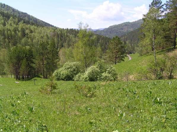Купить 9,3 Гектара земли в Чемальском районе на берегу Куюма