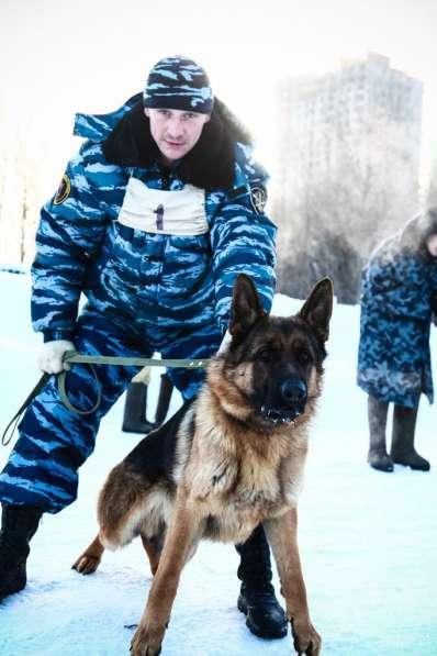 Щенки немецкой овчарки в Нижнем Новгороде