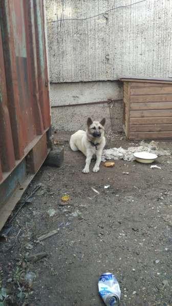 Продаётся хороший друг надёжный охранник в Оренбурге фото 3