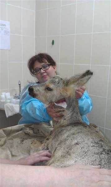 Ветеринарный врач высшей категории