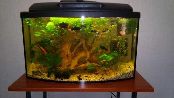 СУПЕР аквариум