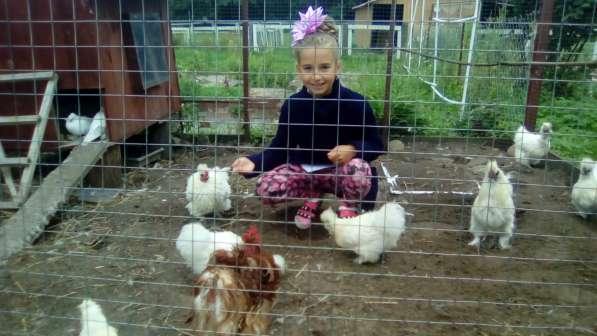 День рождения ребенка в питомнике пони. Полесск. в Калининграде фото 3