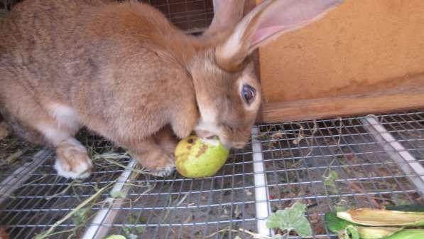Кролики в Анапе