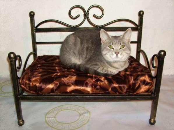 Кованая кроватка для Вашего питомца