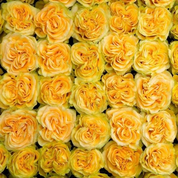 Цветы напрямую от плантаций Эквадора от 1 коробки в Москве фото 6