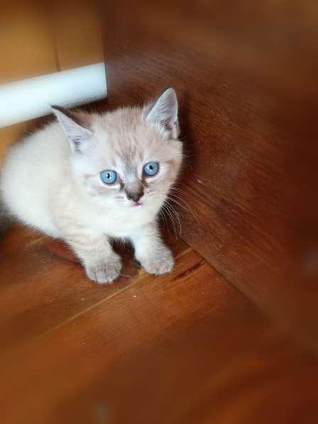 Подарю котят в фото 3