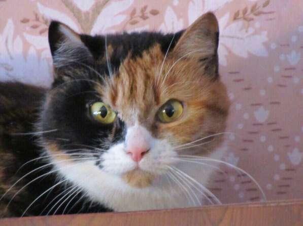 Кошечка красавица ищет дом
