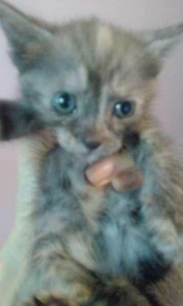 Котята лакки-счастливцы