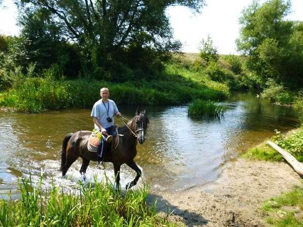 Конные прогулки в поля в Воронеже фото 4
