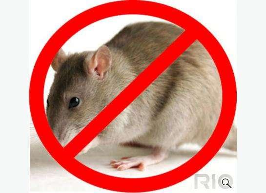Мыши крысы уничтожить грызуны - Томск