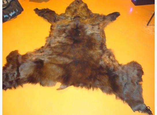 шкура медведя в Таштаголе фото 3