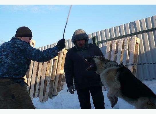 Дрессировка собак в вашем городе! в Москве фото 5