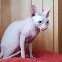 Белая кошечка, в Ялте