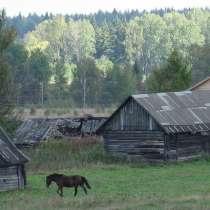 Помощник по хозяйству на лошадиную ферму(г. Шелково), в г.Щелково