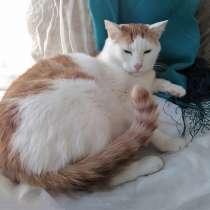 Крупный бело-рыжий котик Даня в добрые руки, в г.Москва