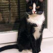 Весельчак и хулиган, молодой ласковый котик Кеша, в г.Москва