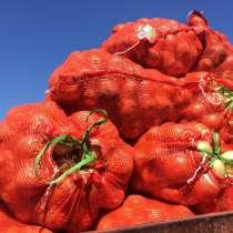 Лук, овощи, фрукты, в Брянске