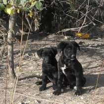 Для щенков ищем дом, в г.Луганск