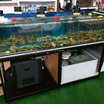 Торговая витрина для устриц, крабов, омаров, гребешков и др, в Севастополе