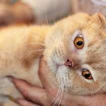 Великолепный кот Черчиль ищет дом, в г.Москва
